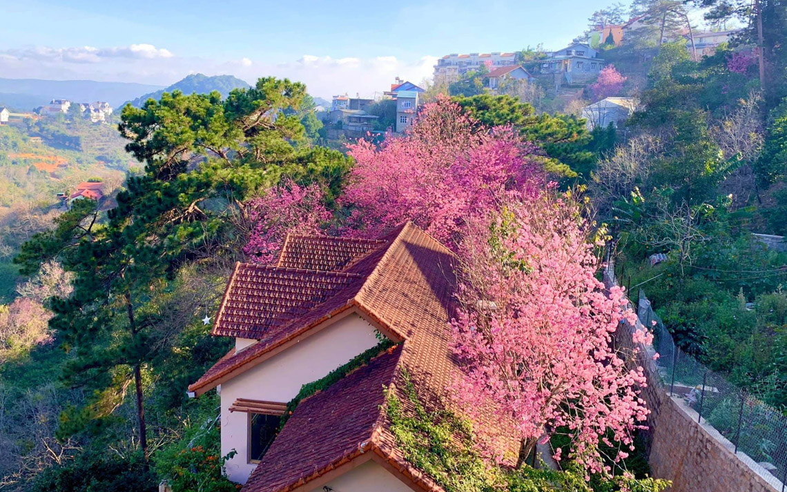Ngôi nhà đẹp như cổ tích giữa lưng chừng đồi ở Đà Lạt-01