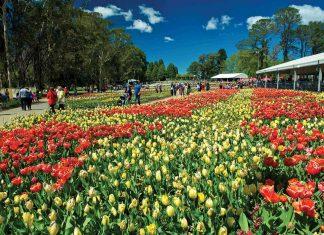 Thăm Úc nhân dịp lễ hội hoa xuân Floriade