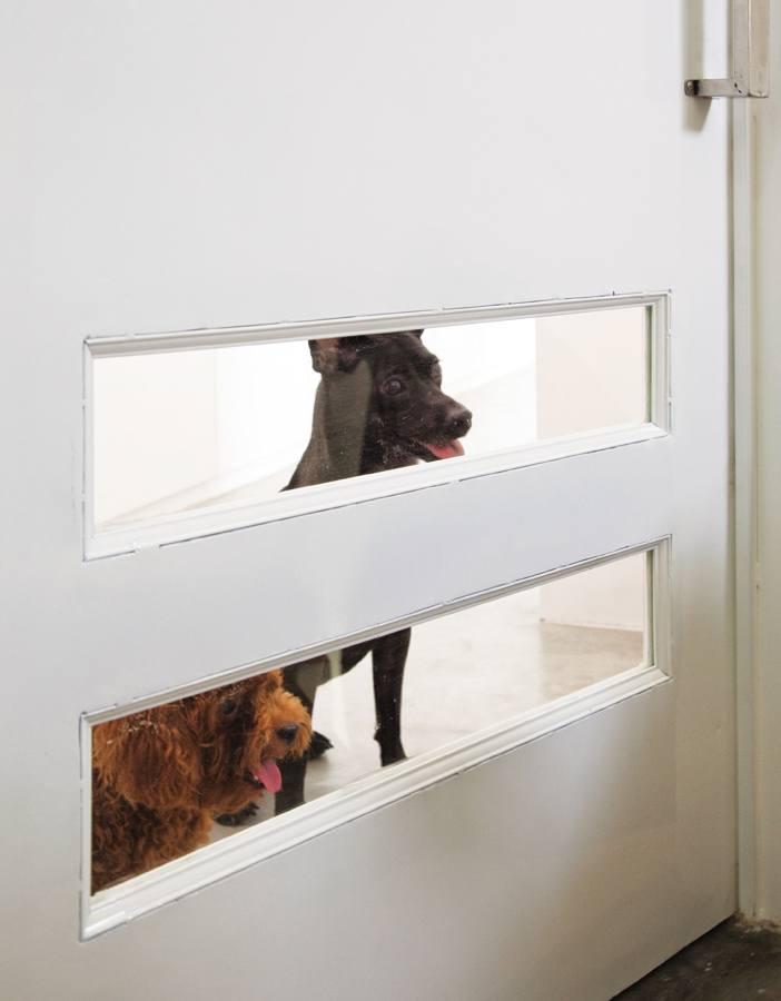 """Chỗ ở của chó có cả """"cửa sổ"""" nhìn ra ngoài"""