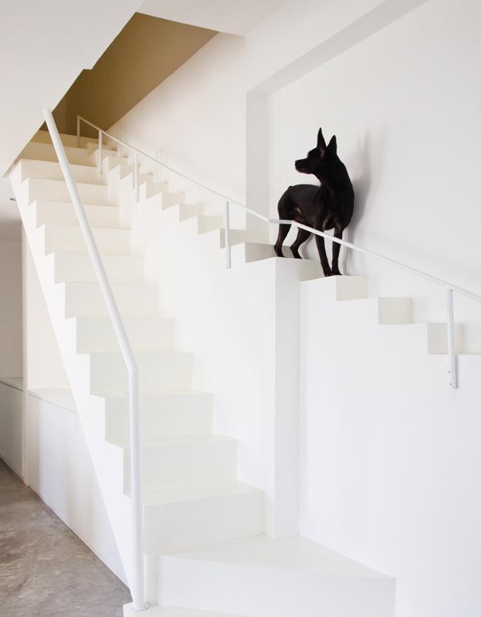 Chó đi thang chó…