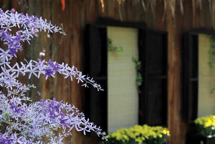 Cửa sổ hoa