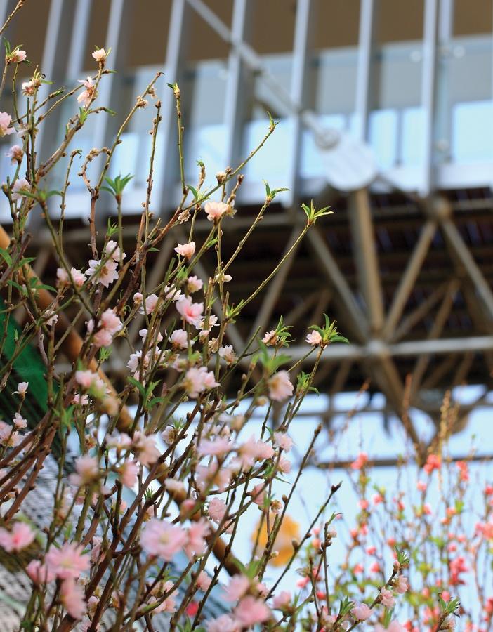 Hoa trước sân nhà