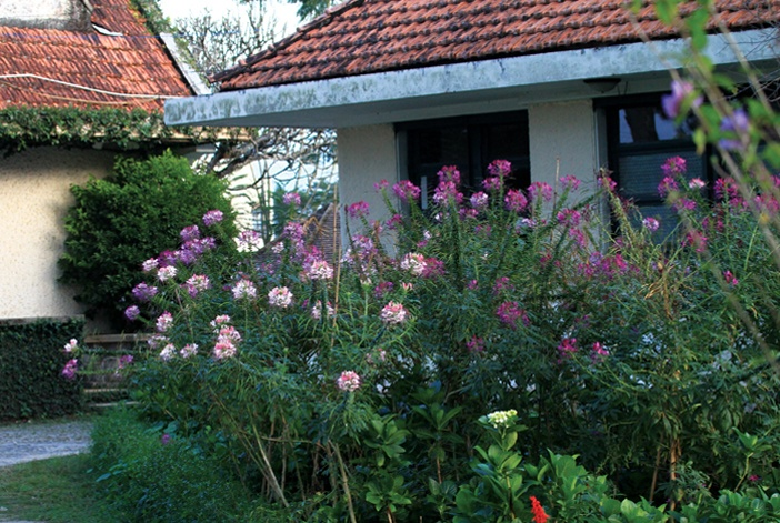 Hoa trong vườn