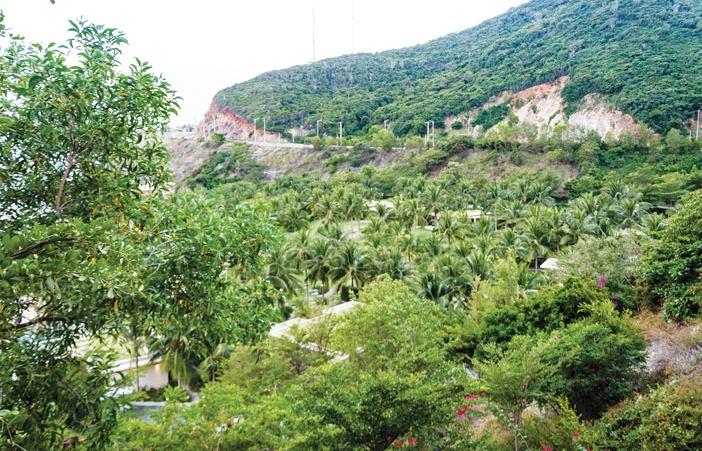 """Mia Resort Nha Trang - sau bốn năm hoàn công xây dựng, hiện nay đã được bao phủ bởi những hàng dừa xanh mát. Toàn bộ các căn bungalow được phủ bởi những mảng cỏ xanh trên mái được gọi là """"green roof"""", không những có chức năng làm mát mà còn là yếu tố thẩm mỹ, ngụy trang cho những căn bungalow từ hướng nhìn phía đường cao tốc. Không chỉ vậy, những mái nhà xanh này còn là yếu tố kết hợp hài hòa với cảnh quan chung quanh"""