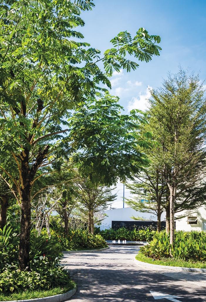 Estella Heights Show Gallery, quận 2, TP.HCM - Dọc theo hai bên lối vào là những cây cao lớn xanh tốt tạo bóng mát cho con đường, đồng thời làm giảm độ chói và phản xạ nhiệt ra môi trường, tạo cảm giác thân thiện và thư giãn cho lối vào chính
