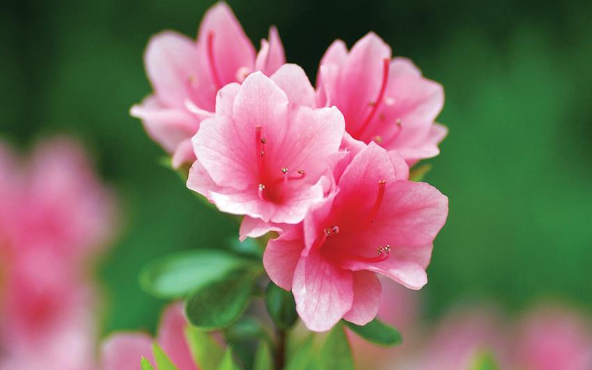 Chưng hoa ngày tết