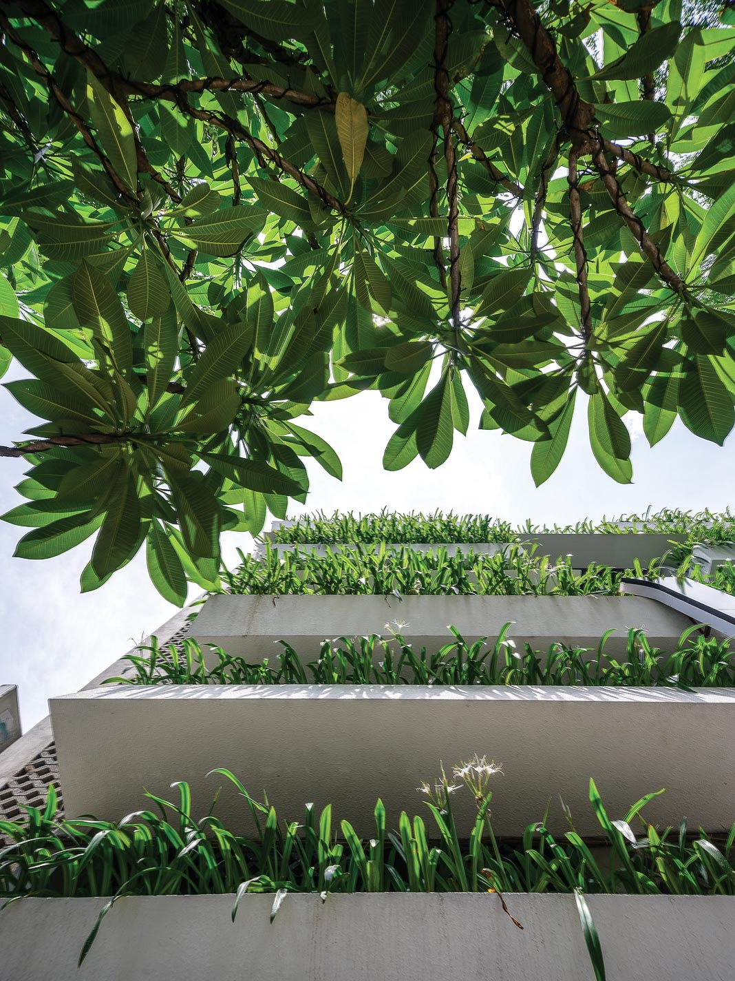 Mái vươn rộng, khối nhà lồi lõm, phủ cây xanh… giúp giảm lượng nhiệt truyền trực tiếp và nhiệt phản chiếu lên các bề mặt nhà 2